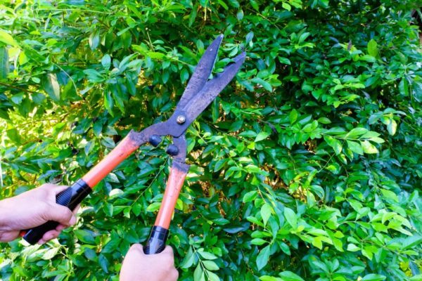 poda arboles Escorial