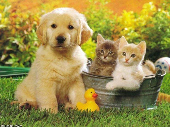 mascotas-jardin