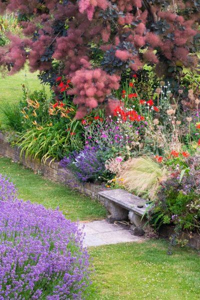 Las plantas que se propagan en un jardín inglés