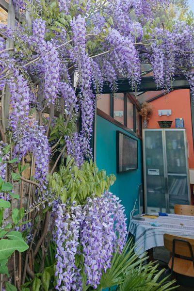 Azul wisteria con paredes de color