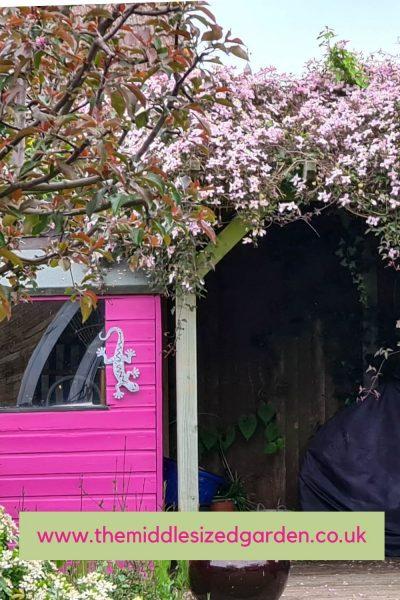 Rosa clematis y rosa caseta de jardín
