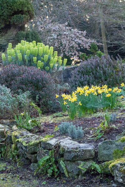Los bulbos de primavera en Doddington Lugar de los Jardines