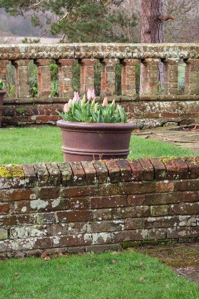 Tulipanes en macetas.