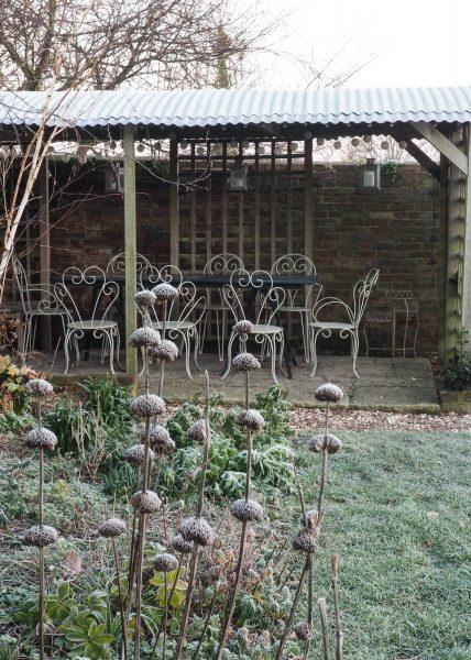 Phlomis russeliana propagación para formar grupos y la oferta de verano y de invierno de interés.