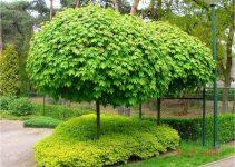 Los mejores árboles para jardín