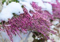 Plantas para invierno