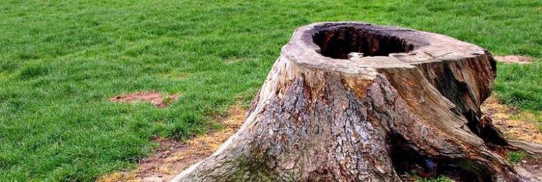 como eliminar los troncos de los arboles